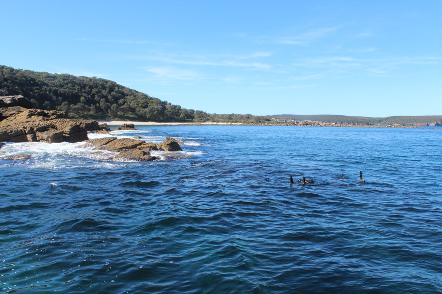 Seals in the beautiful Jervis Bay
